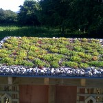 Sedum Roof on Garden Shed | Green Roofs
