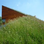 Wildflower & meadow grass | Green Roofs from Landtech Soils